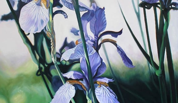 Mary McLoughlin, Blue Siberian Irises