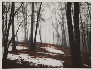 Into the Woods: Etchings by George Raab