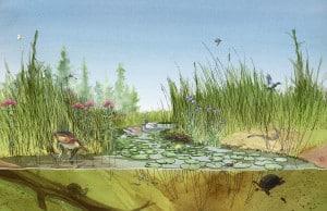 Chris Coles: Wildlife and Habitat along the Trent Severn Waterway