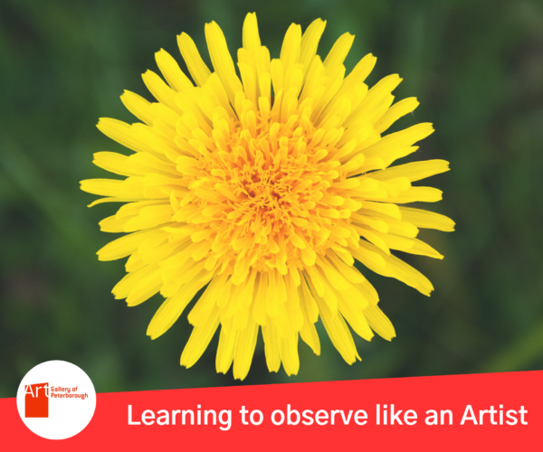 """AGP logo. Dandelion. Text reads: """"Learning to observe like an Artist."""""""