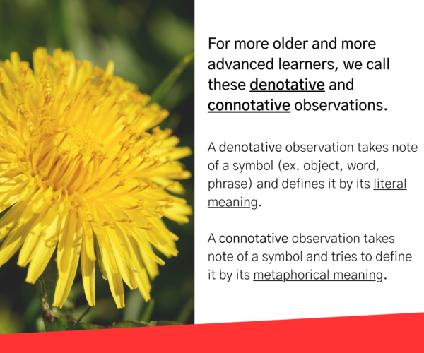 """Dandelion. Text reads: """"For more older and more advanced learners, we call these denotative and connotative observation. A denotative observation takes note of a symbol (ex. object, word, phrase) and defines it by its literal meaning. A connotative observation takes note of a symbol and tries to define it by its metaphorical meaning."""""""