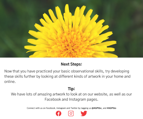 """Dandelion. Text reads: """"Next Steps: Now that you have practiced your basic observational skills, try developing these skills further by looking at different kinds of artwork in your home and online. Tip: we have lots of amazing artworks to look at on our website, as well as our Facebook and Instagram pages."""""""