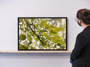 Person on right viewing artwork of tree branch with leaves